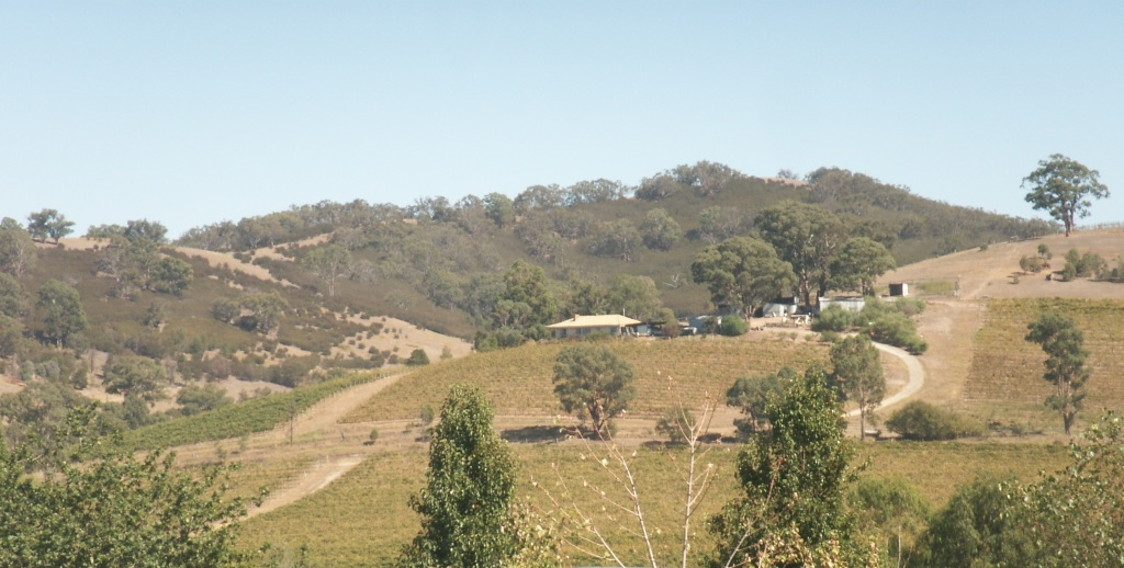 De Bortoli vineyards in the Yarra Valley